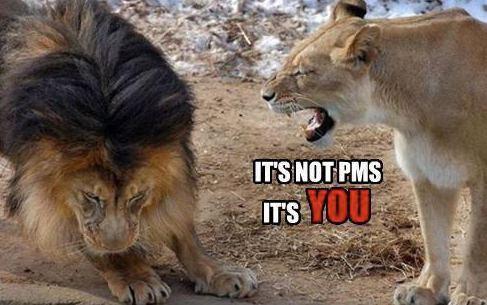 [Image: LionPMS.jpg]