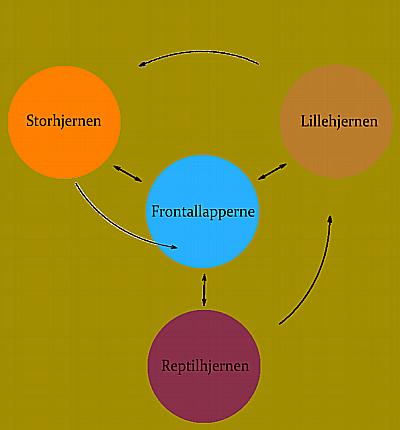 HjernenOgUdvikling1